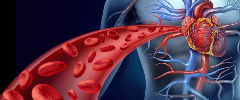 как очистить кровь от холестерина