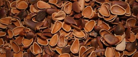 Полезные свойства грецких орехов:  чем полезны для организма масло, скорлупа и ореховые  ядра